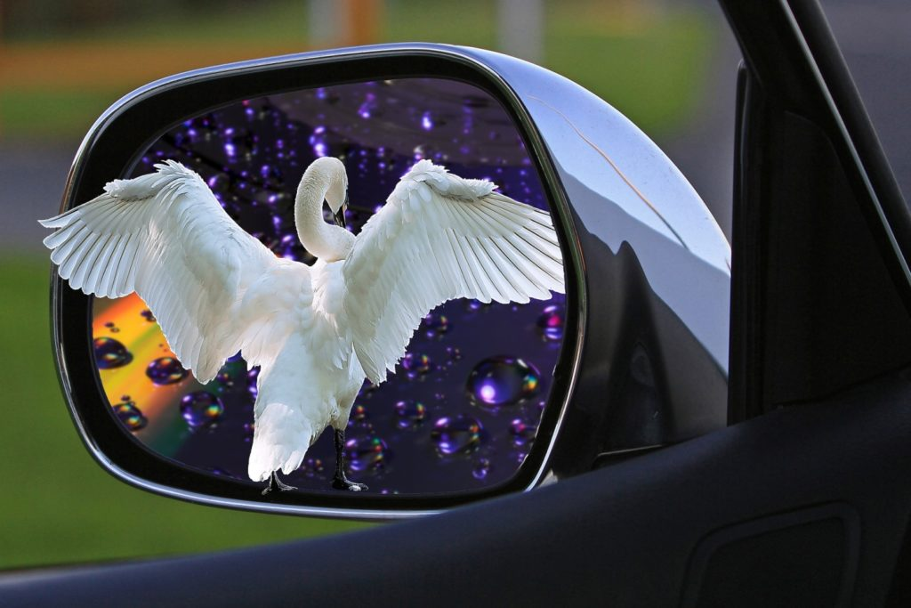 bird on car mirror image
